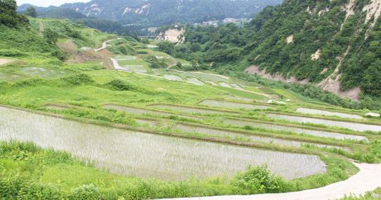 四ケ村の棚田