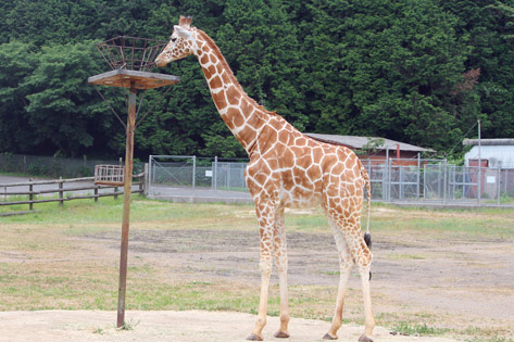 秋吉台自然動物園サファリランド