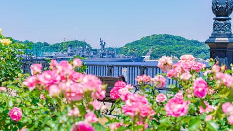 横須賀おすすめ観光スポット~現地スタッフ厳選 BEST20~