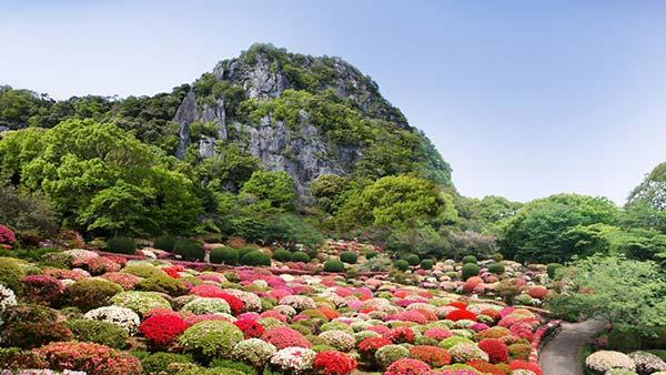 御船山楽園の花まつり