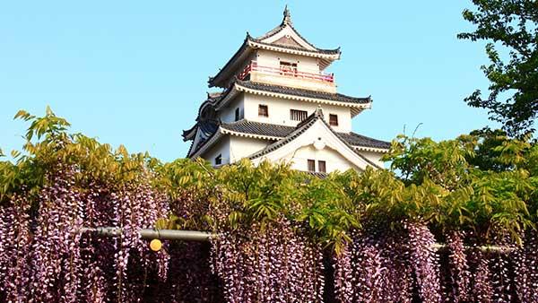 唐津城と藤の花