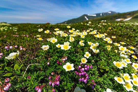 旭岳(大雪山国立公園)