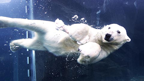 北海道の夏に行きたい!アクティビティ、動物園、絶景&ドライブコース