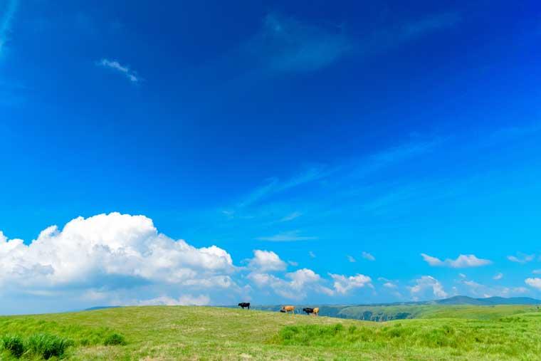 大観峰から眺める阿蘇カルデラ