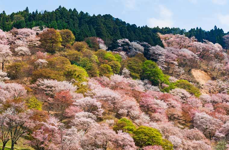 奈良県 吉野山