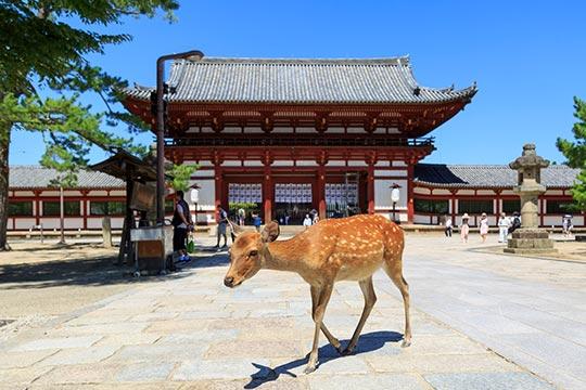 奈良県 奈良公園 東大寺中門と鹿