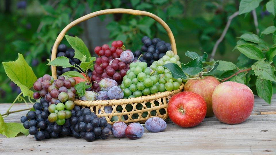 秋が旬!おすすめ果物狩りスポット21選
