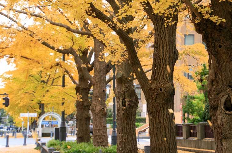 日本大通り・山下公園通り