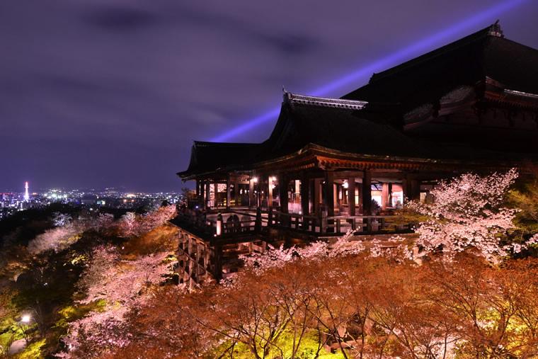 清水寺の桜 ライトアップ
