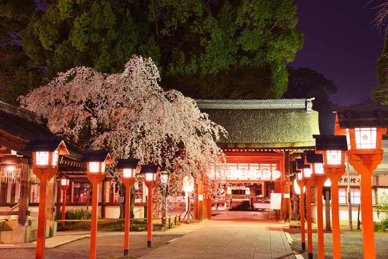 平野神社の桜 ライトアップ