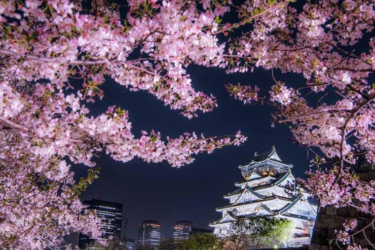 大阪城公園の桜 ライトアップ