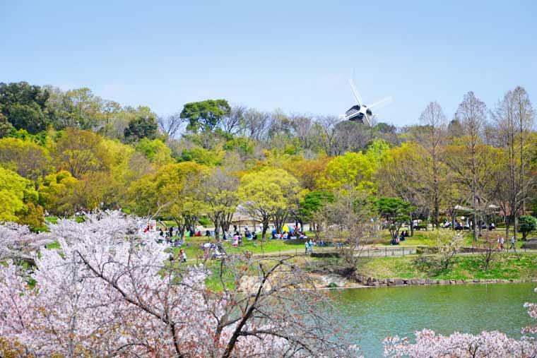 花博記念公園鶴見緑地の桜