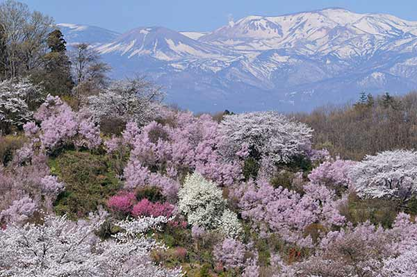 Hanamiyama, the