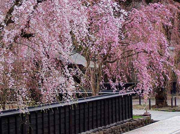 Kakunodate Samurai District
