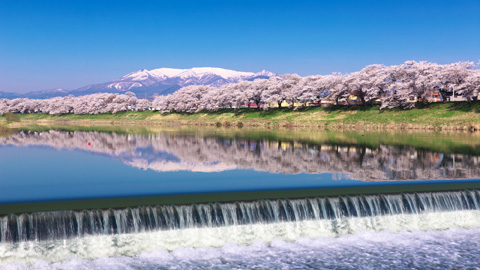 「東北・夢の桜街道」 お花見スポット厳選21選