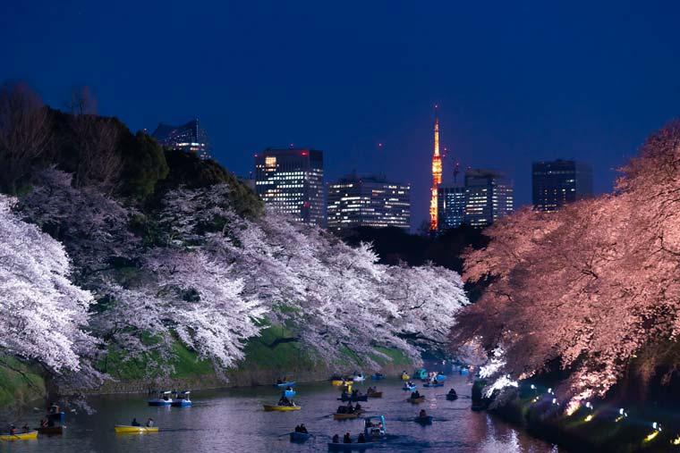 千鳥ヶ淵公園の桜 ライトアップ