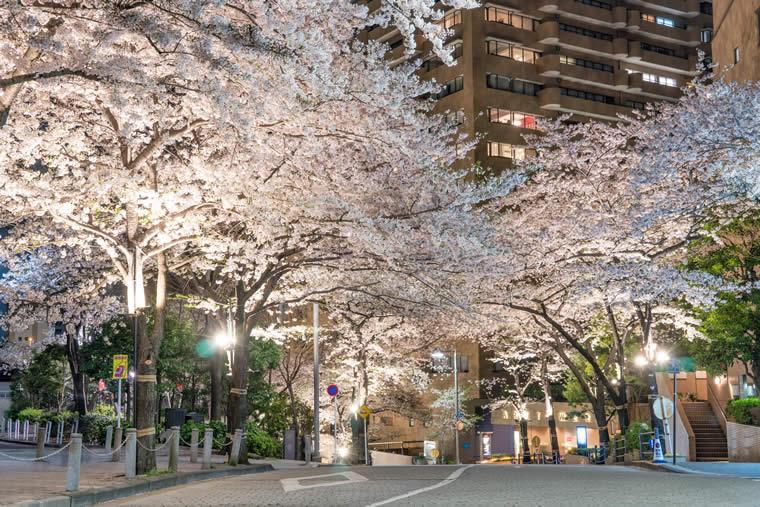 アークヒルズの桜 ライトアップ