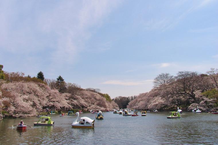 이노카시라온시 공원