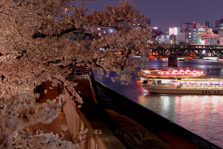 隅田川の桜 ライトアップ
