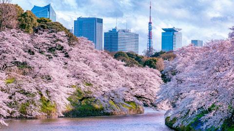 東京桜の名所 お花見スポット・夜桜ライトアップ情報2018