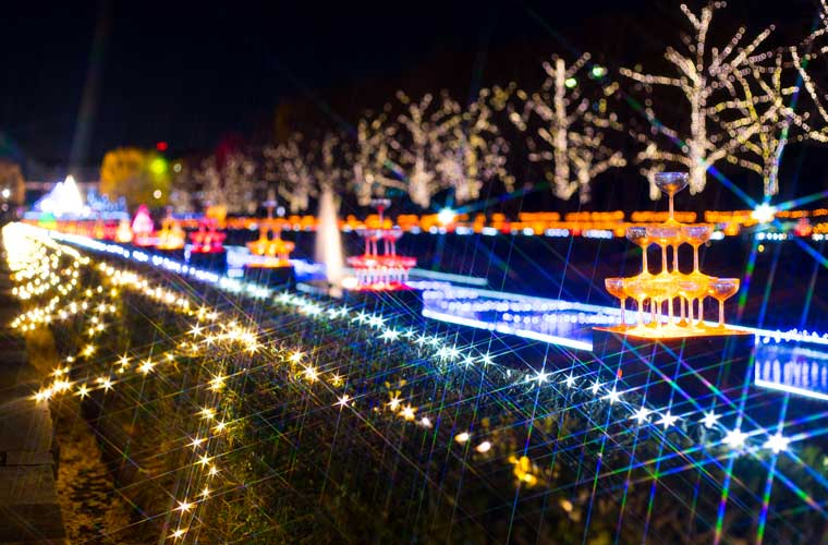 国営昭和記念公園「Winter Vista Illumination」