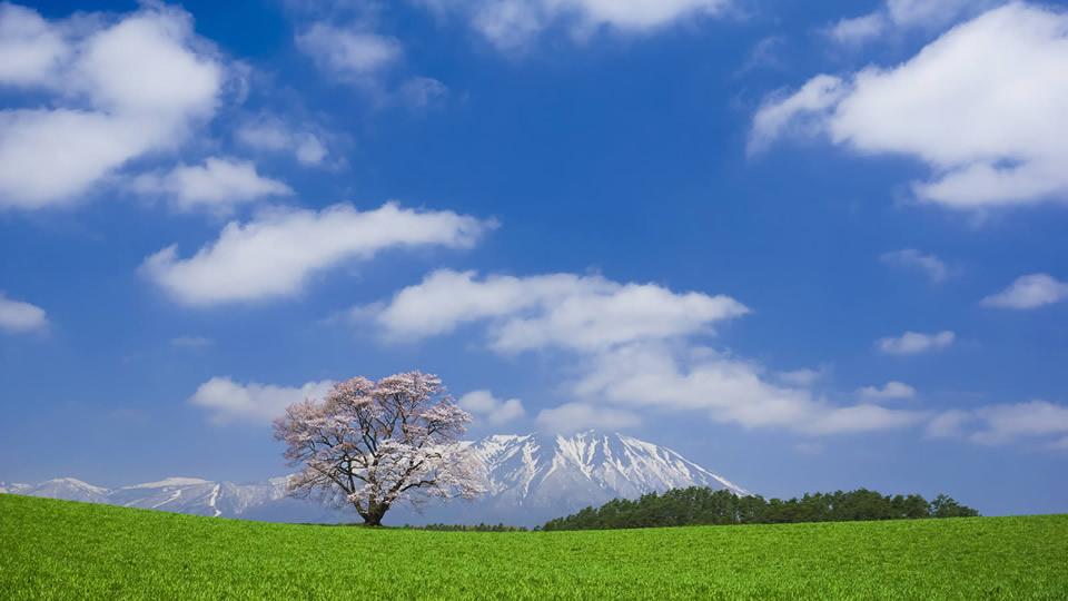 長い年月を超えて孤高に咲き誇る、全国の一本桜15選