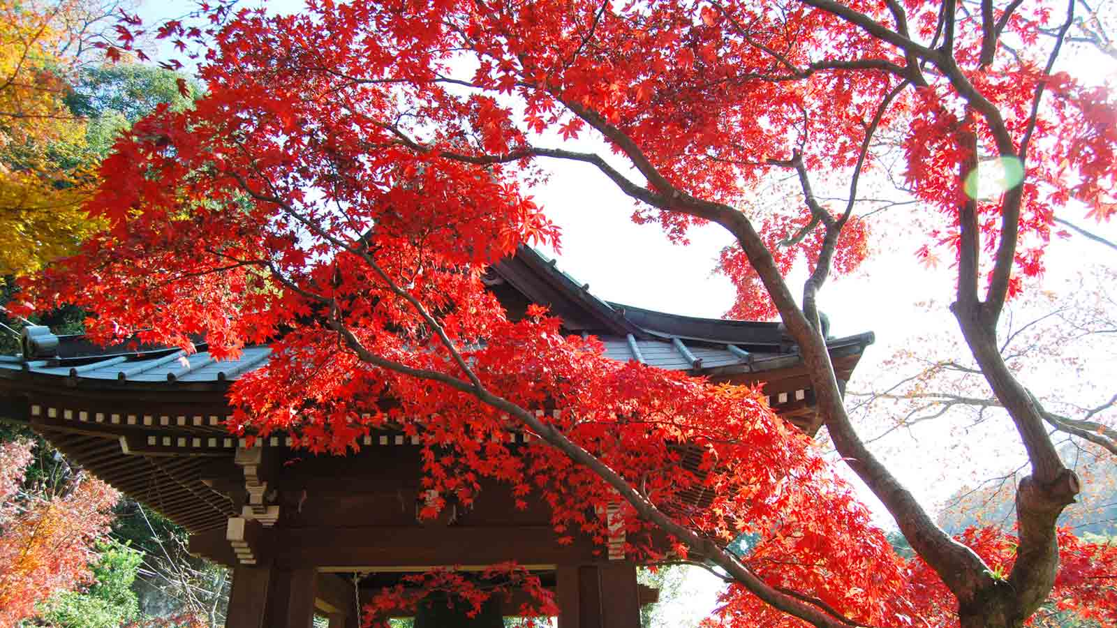 Autumn Colors in Kamakura: 8 Classic Temples with Beautiful Fall Landscapes