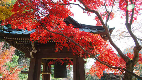 鎌倉のおすすめ紅葉名所12選!見頃時期や2020年ライトアップ情報も