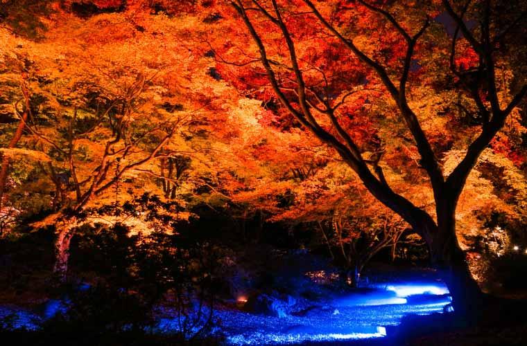 紅葉 見頃 関東