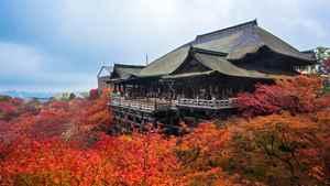 祇園・京都駅周辺の紅葉スポット