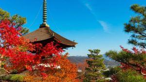 嵐山エリアの紅葉スポット