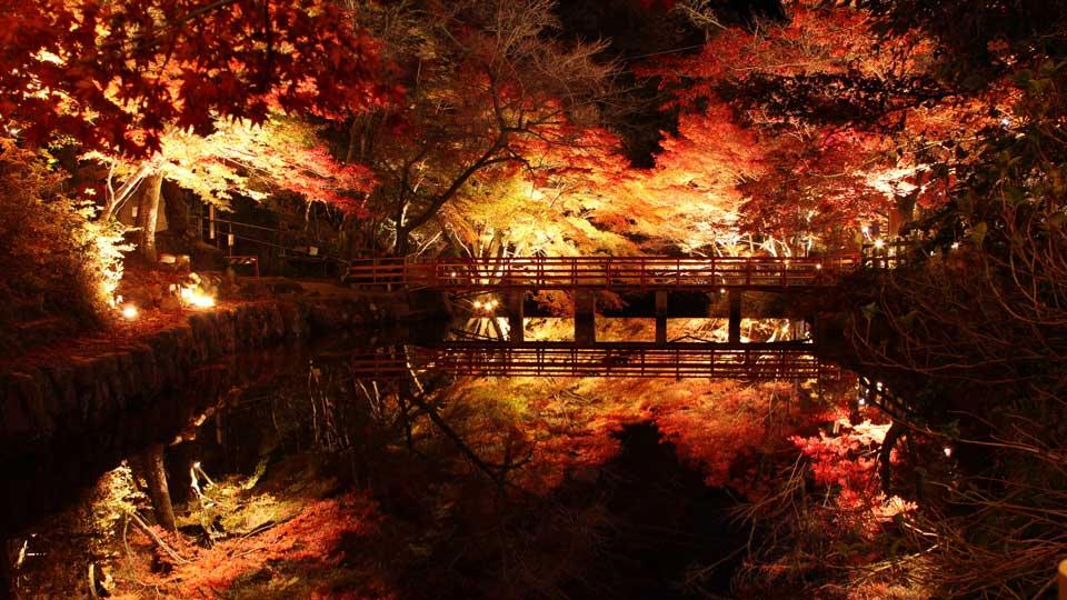 この秋行ってみたい紅葉ライトアップランキングTOP25