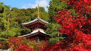 京都の宿が選ぶ! 誰にも教えたくない京都の穴場紅葉スポット41選