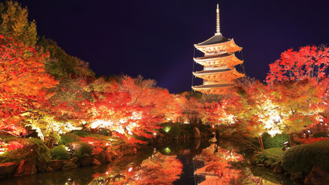 京都・紅葉ライトアップの名所と見頃情報