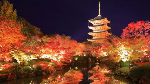 京都・紅葉ライトアップの名所と見頃情報【2020年版】