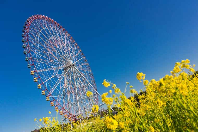 葛西臨海公園の菜の花