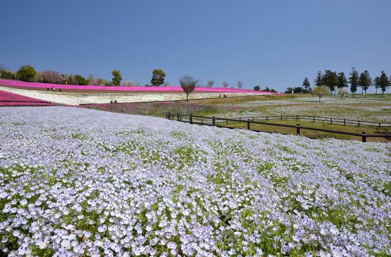 八王子山公園(太田市北部運動公園)
