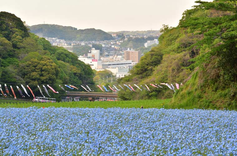 横須賀 くりはま花の国