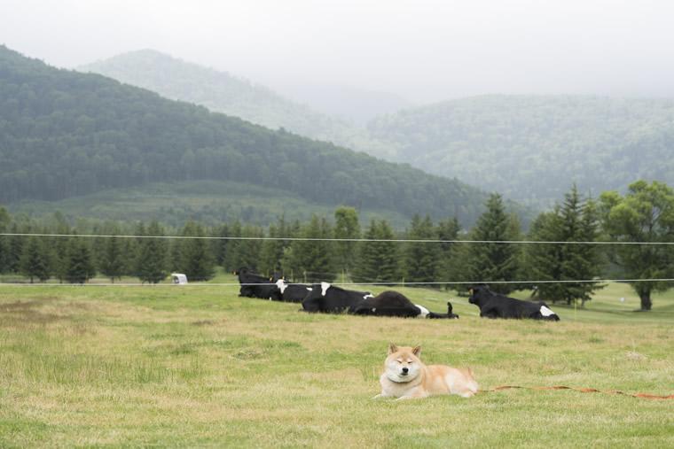 柴犬まるの北海道の旅