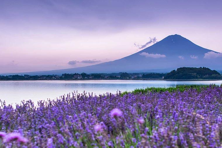 富士山 周辺エリア
