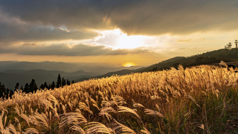 黄金色の絶景!日本国内の美しいススキの名所