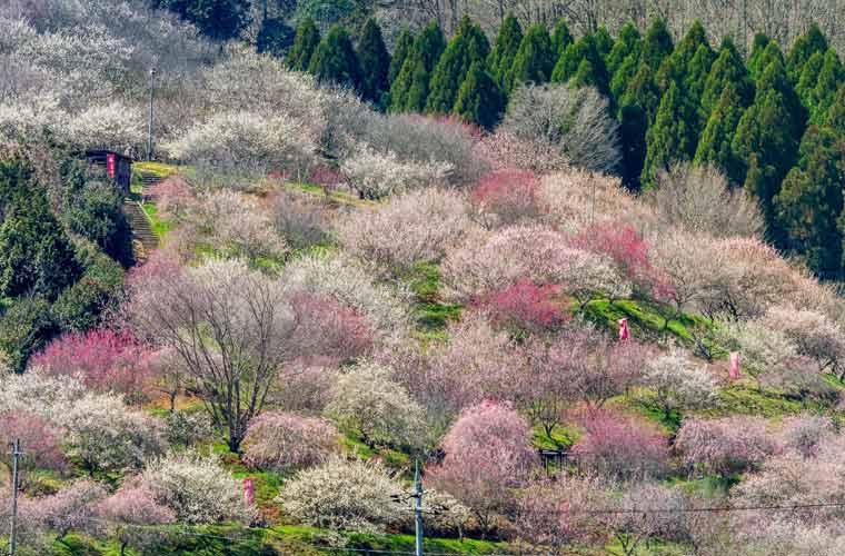 津山市神代 梅の里公園