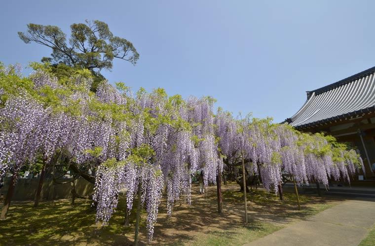 住雲寺(じゅううんじ)