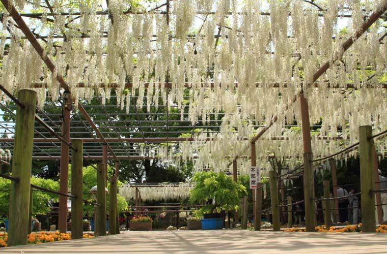 曼陀羅寺公園