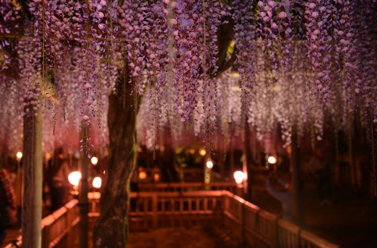 行興寺・豊田熊野記念公園