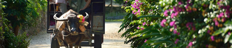 沖縄離島(石垣島・宮古島)旅行・ツアー 【楽天トラベル】竹富島の水牛車