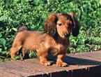 小型犬(10kg以下)