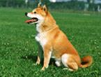中型犬(25kg以下)