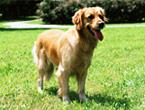 大型犬(40kg以下)