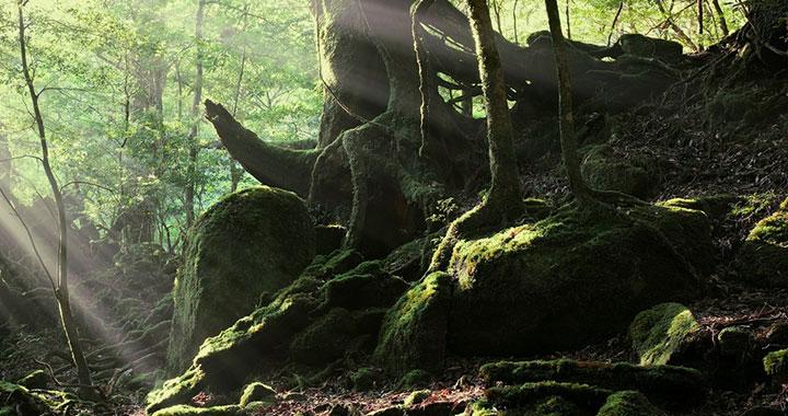 世界自然遺産・屋久島に佇むオーベルジュリゾート